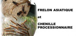 FRELON ASIATIQUE ET CHENILLE PROCESSIONNAIRE